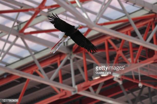 Benfica eagle Vitoria flies before the start of the Liga NOS match between SL Benfica and CD Tondela at Estadio da Luz on June 4 2020 in Lisbon...
