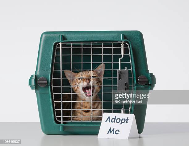 Bengal Cat in Cat Carrier with Adopt Me Sign