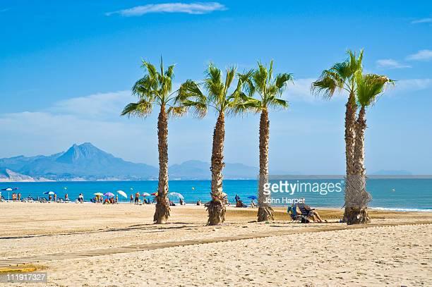 benidorm beach, costa blanca, spain - benidorm foto e immagini stock