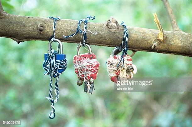 Tied locks to lock people are hung to a tree branch in the sacred forest