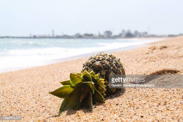benin seascape - footprint stock pictures, royalty-free photos & images