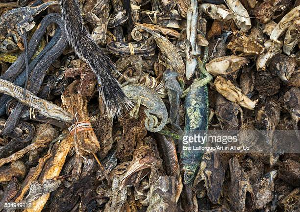 Benin West Africa Bonhicon a voodoo market with many snakes and chameleons