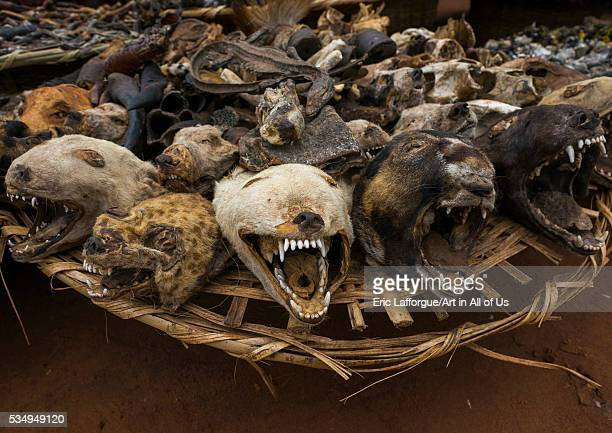 Benin West Africa Bonhicon dogs and hyenas heads sold on a voodoo market