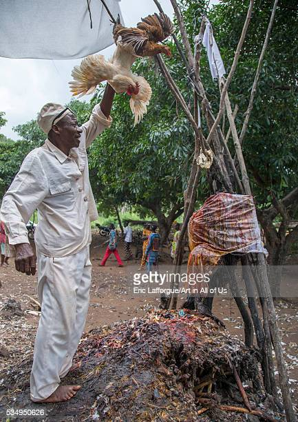 Benin West Africa Dankoly the slaughter of a chicken in a ritual sacrifice during a voodoo ceremony