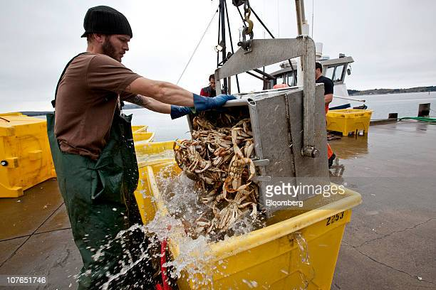 Benjamin Willhoit a Wild Planet employee dumps a bucket of dungeness crabs into a crate for shipping in Bodega Bay California US on Sunday Dec 12...