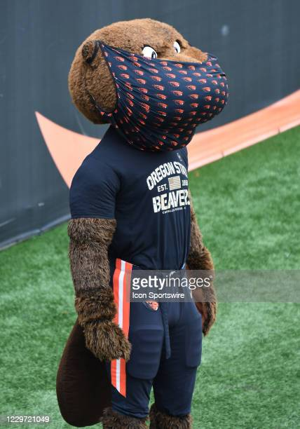 Benny the Beaver stands on the sideline with his mask during a PAC-12 conference football game between the Cal Bears and Oregon State Beavers on...