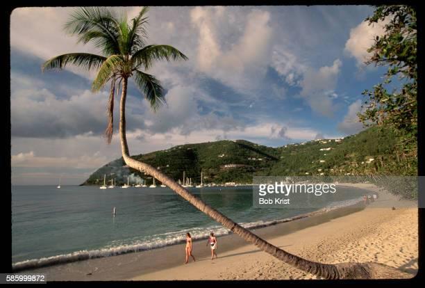 bent palm at cane garden bay - cane garden bay stock pictures, royalty-free photos & images