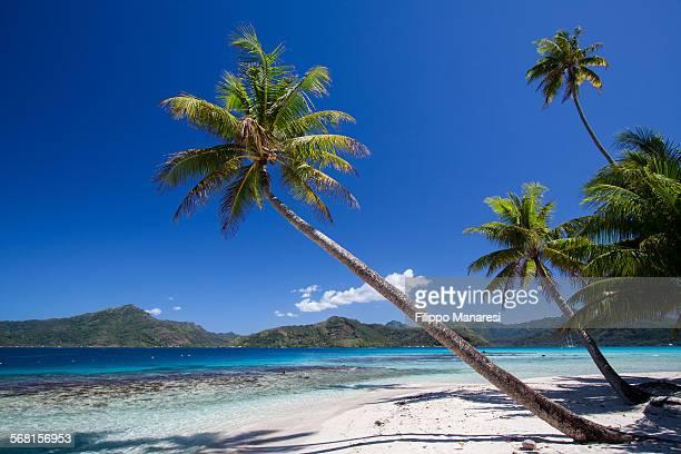 Bent palm tree