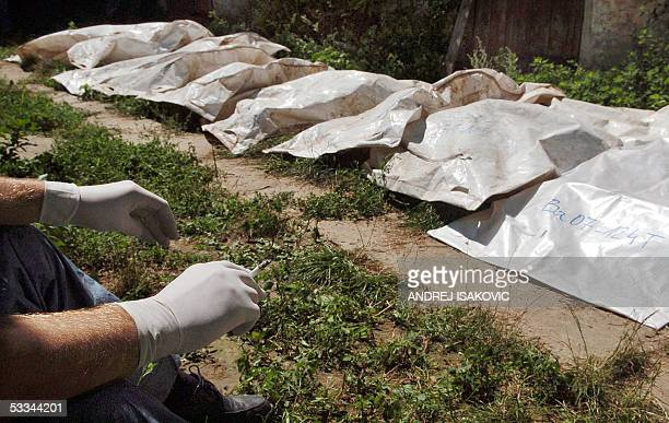 Body bags with the remains of Kosovo Albanians buried in mass graves in Serbia in 1999 lay in Batajnica near Belgrade 09 August 2005 prior to be...