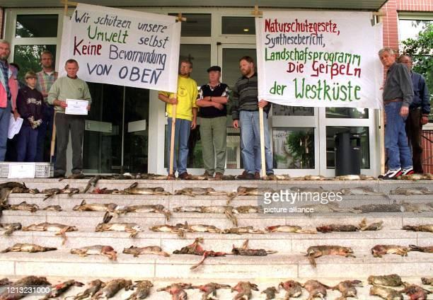 Über 100 tote Hasen haben Bewohner der Westküste Schleswig-Holsteins am 16.7.1998 vor das Umweltministerium in Kiel gelegt. Die Hasen sind nach...