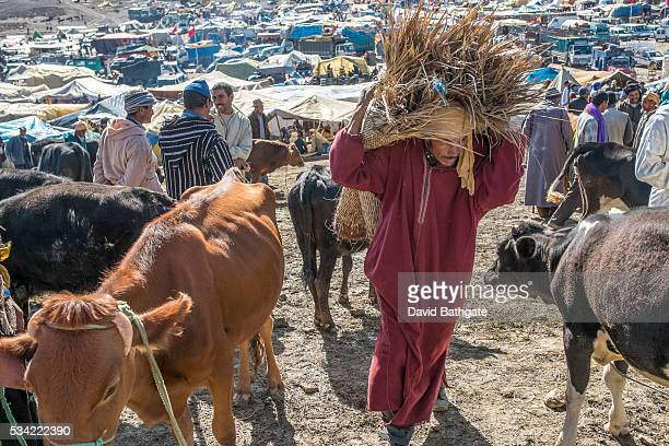 A Berber man carries fodder for livestock at the Imilchil Morocco Marriage and Betrothal Festival livestock market