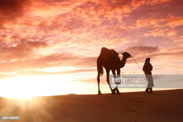 Berber Tribesman Leading Camel at Sunrise