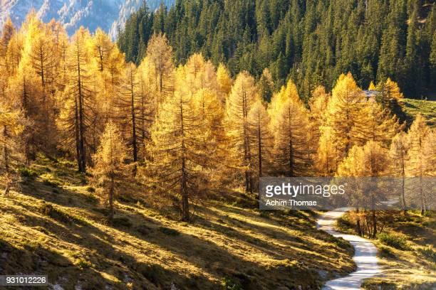 berchtesgadener land, bavaria, germany, europe - berchtesgaden national park stock photos and pictures