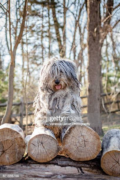 bergamasco pyramid - vanessa lassin stock pictures, royalty-free photos & images