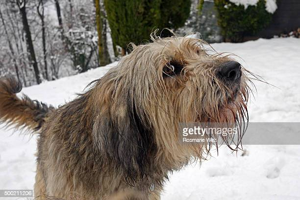 the shaggy dog stock photos and pictures getty images