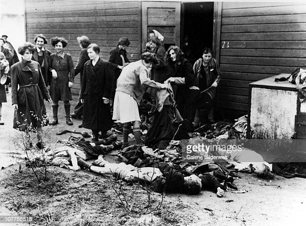 BergenBelsen Concentration Camp Liberated women stripping the dead of their clothing for after camp has been turned over to the Allied 21st Army...