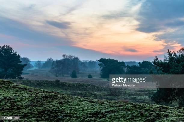 bergerheide - william mevissen bildbanksfoton och bilder