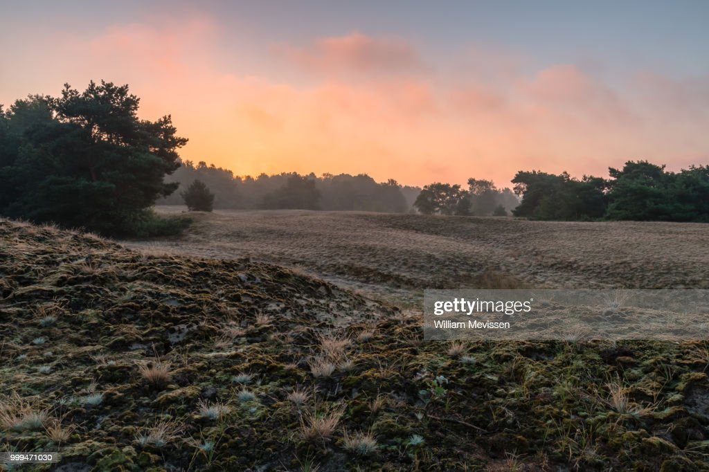 Bergerheide Sunrise : Stockfoto