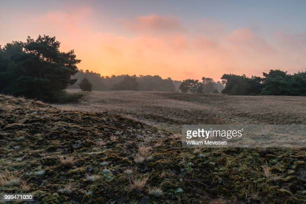 bergerheide sunrise - william mevissen stockfoto's en -beelden