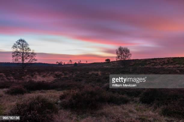 bergerheide twilight - william mevissen ストックフォトと画像