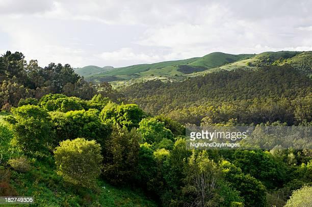 Berkeley Hills - San Francisco Bay Area, Calfornia
