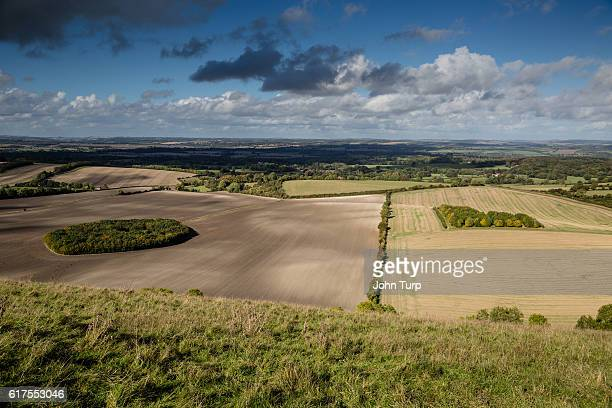berkshire downs tree circles - berkshire downs stock pictures, royalty-free photos & images