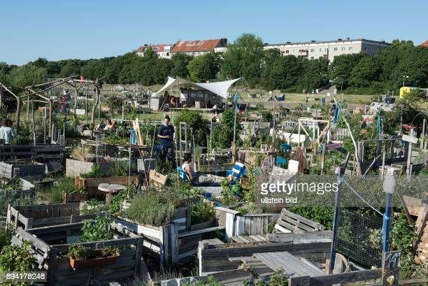 Berlin, , Flughafen Tempelhof, auf dem ehemaligen Tempelhofer Flugfeld bauen Hobbygaertner Blumen, Kraeuter, Gemüse und Obst in grossen Holzkisten...