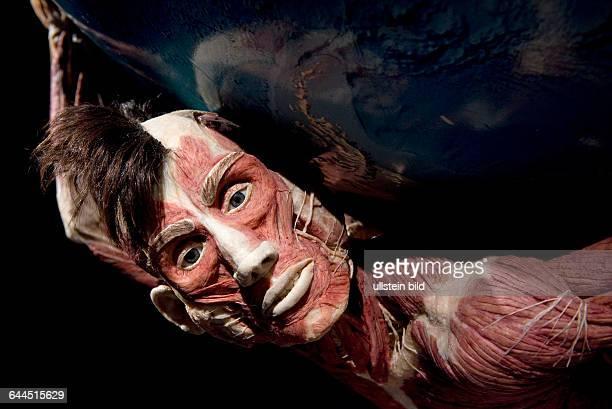 Berlin Pressebesichtigung der neuen Ausstellungsräume von Körperwelten unter dem Berliner Fernsehturm am Alexanderplatz Atlas trägt die Erdkugel