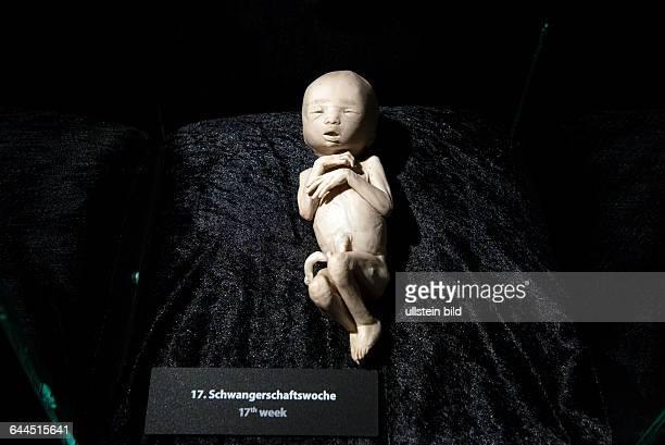 Berlin Pressebesichtigung der neuen Ausstellungsräume von Körperwelten unter dem Berliner Fernsehturm am Alexanderplatz plastinierter menschlicher...