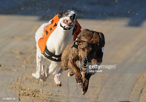 Berlin battles with Hovex Lass during the 7th race at the Coral Brighton and Hove Greyhound Stadium on March 21 2012 in Brighton England