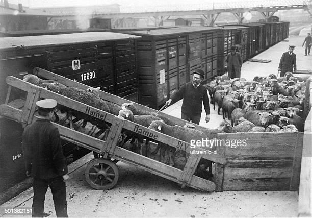 Loading of sheep into railway cars around 1900