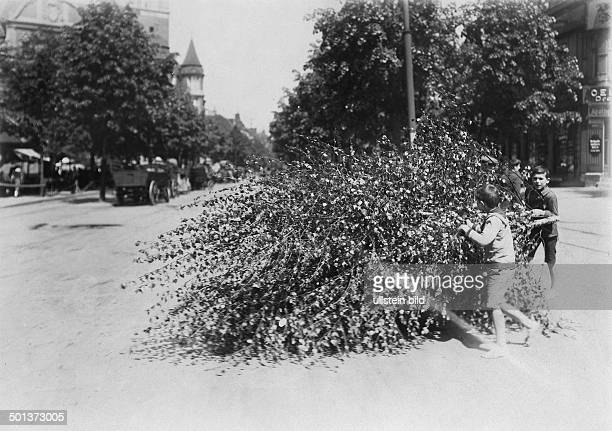 Berlin children transporting a special tree in celebration of Whitsun date unknown