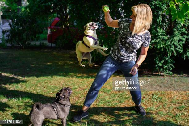 Dog owner Angela Kaiser plays in her garden with her two old German pugs Konrad and Emma With a time of less than six seconds Pug Emma was the...
