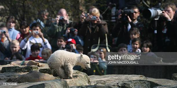 Visitors and photographers watch Knut, a three-month-old polar bear cub, playing in his enclosure at Berlin's Zoologischer Garten zoo 30 March 2007....