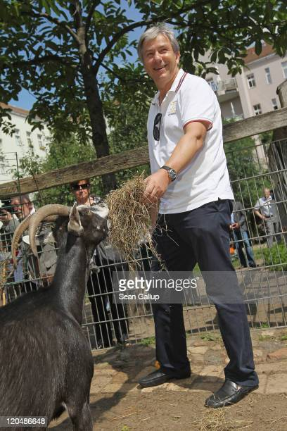 Berlin Mayor Klaus Wowereit feeds a goat while visiting the Ziegenplatz urban farm during a walking tour campaign stop in Charlottenburg district on...