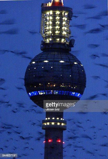 der beleuchtete Fernsehturm umgeben von einem Vogelschwarm