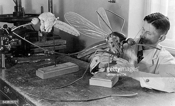 Berlin Museum of Natural History: preparation / models: Creation of a model of a moaquito by head preparator Alfred Keller .1939/40Grupo 33/1930