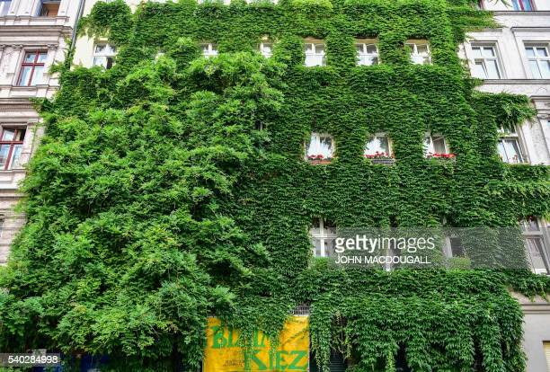 A Berlin residential building is overrun by vines and plants in the city's Kreuzberg district on June 14 2016 / AFP / John MACDOUGALL