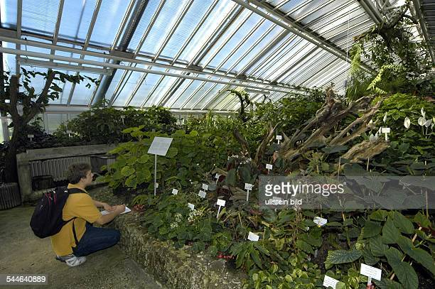 Botanischer Garten Begonien in einemder Gewächshäuser Innenansicht
