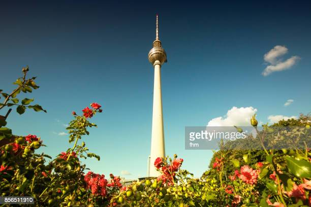 Berlin - television tower with blossom of a rose in summer (Alexanderplatz/ Germany)