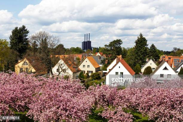 Berlin view: Power station (Berlin Lichterfelde) with residential houses and cherry blossom treeshouses