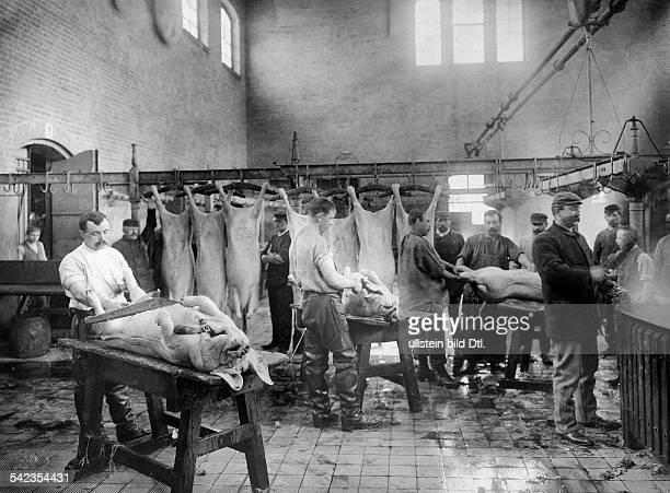 Berlin 'Zentralviehhof' blanching and butchering of pigs at abattoir in Friedrichshain 1897 Photographer Waldemar Titzenthaler