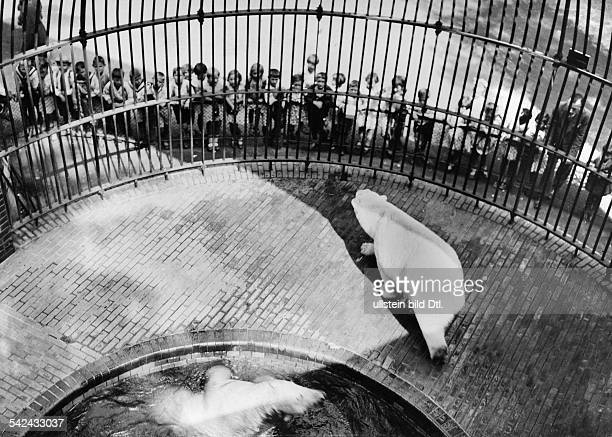 Berlin Zoological Garden View from the top of the polar bear pit 1936 Photographer Friedrich Seidenstuecker Published by 'Hier Berlin' 05/1936...