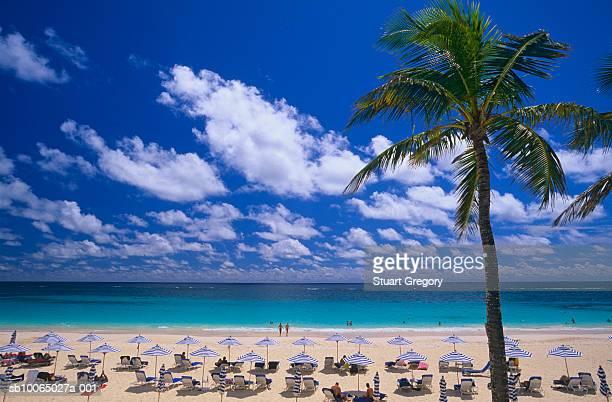 Bermuda, Elbow Beach, elevated view