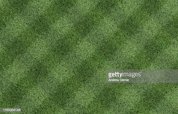 bermuda grass viewed from above with a striped just cut pattern 3d render - andrew dernie stock pictures, royalty-free photos & images
