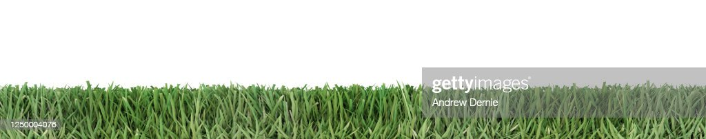 Bermuda Grass viewed from the side, isolated on a white background 3D Render : Stock Photo