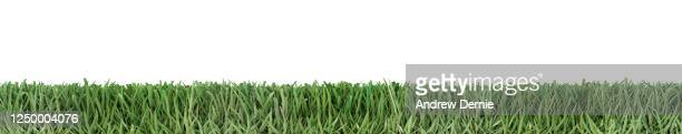 bermuda grass viewed from the side, isolated on a white background 3d render - andrew dernie stock pictures, royalty-free photos & images