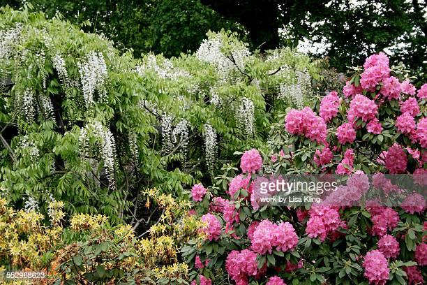 bern, switzerland rose garden - bern stock pictures, royalty-free photos & images