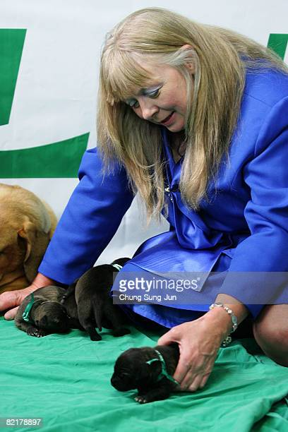 Bernann Mckinney a pet owner plays with her pit bull terrier cloned dogs at the Seoul National University on August 5 2008 in Seoul South Korea The...