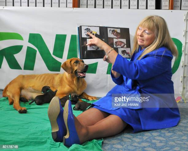 Bernann McKinney from Hollywood California shows the pictures of her beloved former pitbull terrier beside a surrogate mother dog and five clones of...